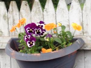 garden may242013 026